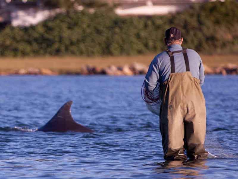 Recanto das Baleias - Golfinhos